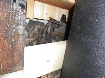 外壁材をめくって出てきた腐食した木材