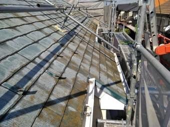 コケの生えたカラーベスト屋根の現地調査の様子