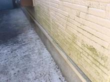 外壁の苔の様子