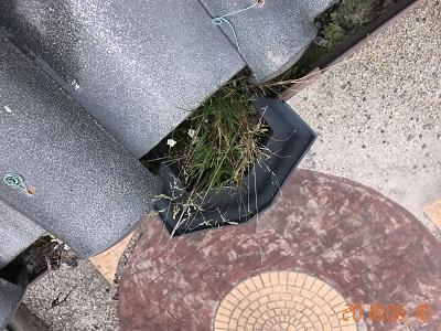 屋根の健康診断での雨樋の様子