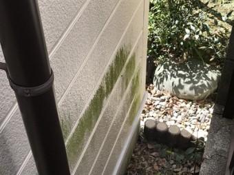 コケの生えた外壁