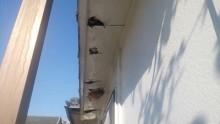 増築部分からの雨漏れの様子