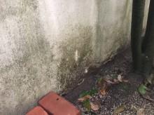 高圧洗浄前の外壁
